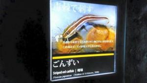 京都水族館5