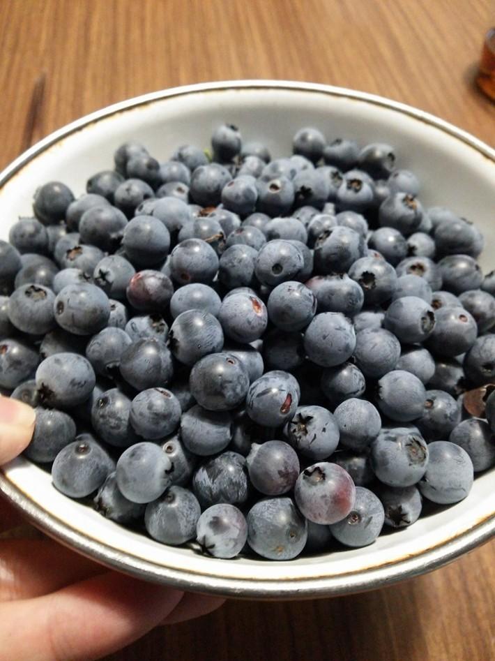 ブルーべりー2016 収穫